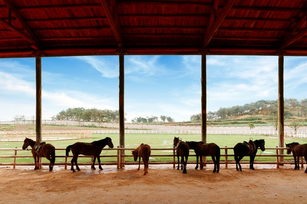 Horse Property Loan Pic