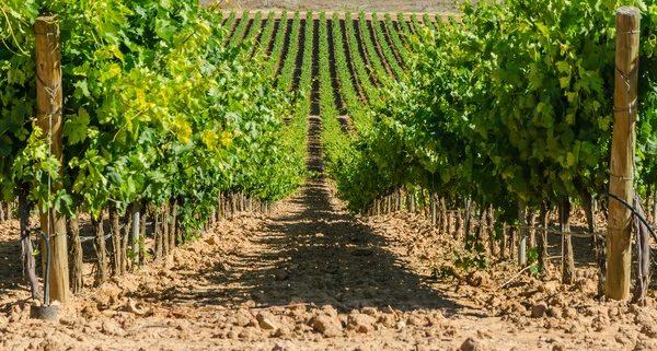 Vineyard Loan Pic